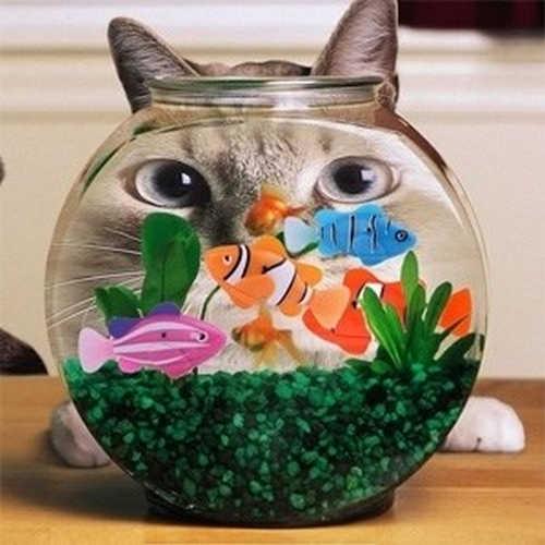 ماهی رباتیک جینو تویز